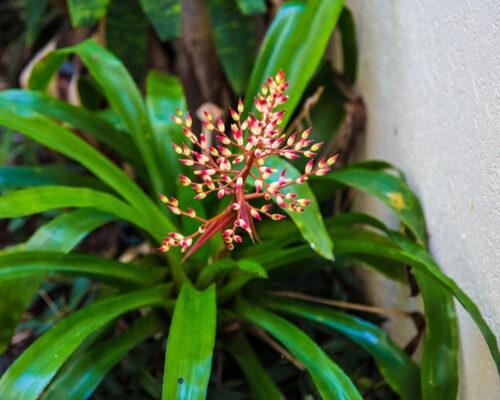 1200-facilities-location-melaleuca-resort-palm-cove24